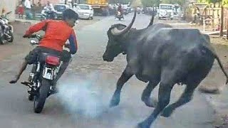 Funny Videos 2018 | Part-2 | TWF | Comedy videos 2018 | Best comedy videos | funny videos