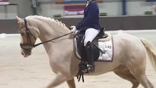 Proef M1 Yellow Boy Brabantse Kampioenschappen 2019 indoor Sophie van der Steen