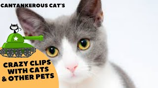 Funniest Confused Cat Compilation 2019 | Funny Pet Videos