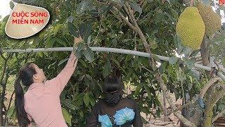 Xin trái cây làm mứt tết cho bà con xem (Thất bại) #namviet