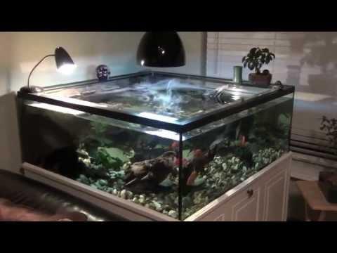 Turtle Tank Setup Youtube Snapping Turtle Tank Setup