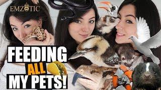 FEEDING ALL MY PETS  - Feeding ALL my Animals in ONE video!