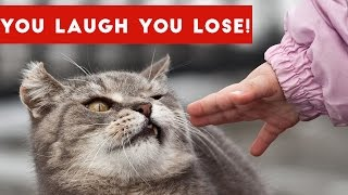 IF YOU LAUGH, YOU LOSE Funniest Animal Compilation 2017 | Funny Pet Videos