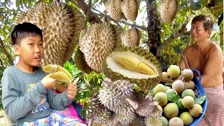 Durian Monthong from Koh Kong Province   Durian Season in Cambodia