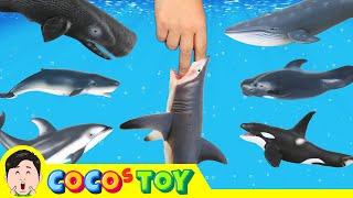 한국어ㅣ고래들을 위해 파티를 열어주었어요! 어린이 교육 만화, 고래 이름 외우기, 컬렉타피규어, 72화ㅣ꼬꼬스토이