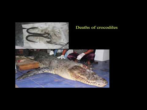 Human - Crocodile conflict in Sri Lanka - Mr. Dinal J. S. Samarasinghe - Part - 1