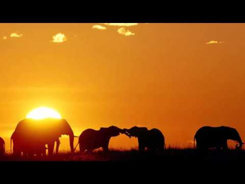3 HOURS Best Relaxing Music | Africa | Shaman | Background, Relax, Sleep, Study, Meditatio