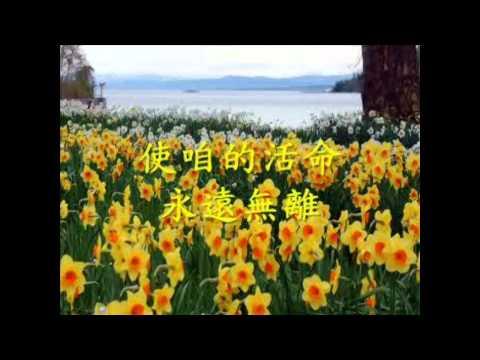 讚美之泉詩歌欣賞 - 寵物村_插圖