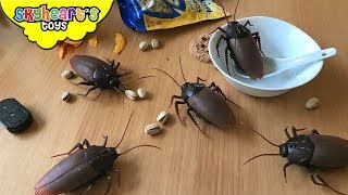 COCKROACH INVASION in our house! Skyheart Daddy swatting battle giant cockroaches insects toys