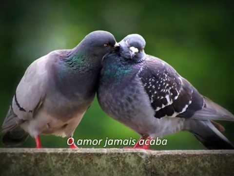 Baixar O Amor Jamais Acaba - Prisma Brasil [Legendado] (HD)