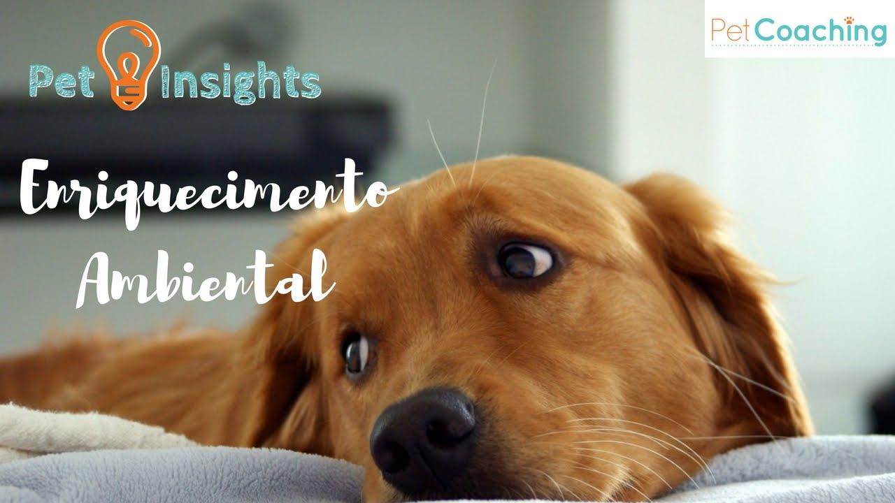 PetInsights: Enriquecimento Ambiental