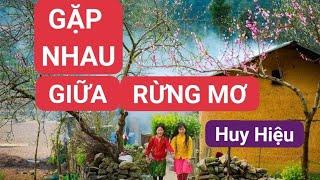 Gặp nhau giữa rừng mơ (Sáo trúc độc đáo ) - Huy Hiệu /Website :saotruchuyhieu.com