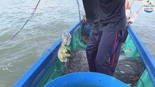 Thăm lưới tôm tích vùng biển miệt thứ / shrimp