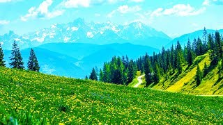 Relaxing Morning Music - Piano Music Background For Study, Yoga, Meditation (Honley) - YouTube
