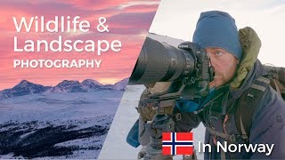 Wildlife and Landscape Photography in Norway   VLOG from my trip to the awesome nature of Norway