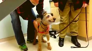 After This Blind Dog Got Surgery To See Again, His Adorable Reaction Touched 14 Million Hearts