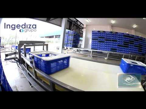 Línea de Recibimiento de Aves Grupo Ingediza - RM.mov