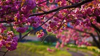 Gandharvák: Tavasz/Spring (Uplifting Classical music)
