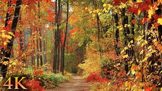 11 HOURS of 4K Enchanting Autumn Nature Scenes + Relaxing Piano Music for Stress Relief