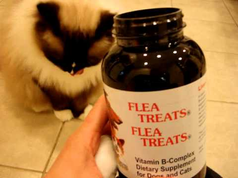 ragdoll cats receive flea treats natural flea treatments for cats floppycats youtube. Black Bedroom Furniture Sets. Home Design Ideas