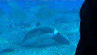 水族館でサメの交尾