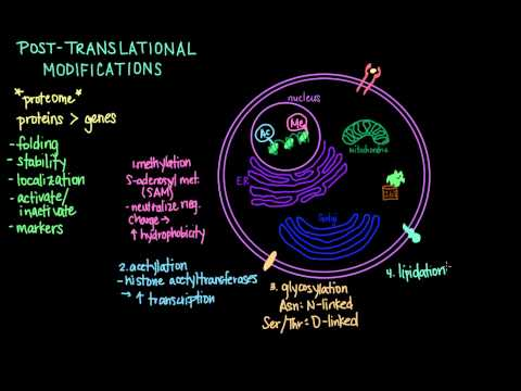 post translational modification methylation