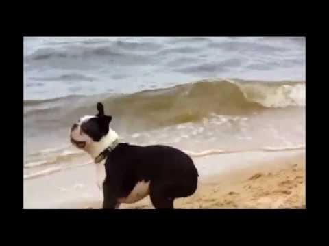Kupanje pasa i problem sa ušima