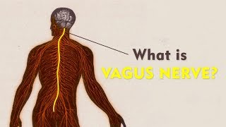What Is The Vagus Nerve? | The Art Of Living