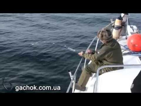 Морская рыбалка на севере