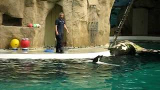 Delfines y pelotas