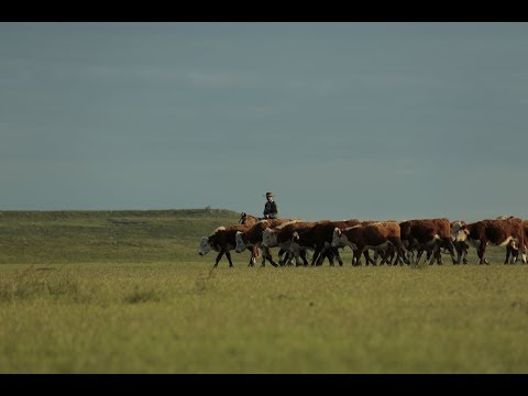 A look into Verde's 100% grass-fed beef, including footage from the farms themselves in Uruguay. Here, the world's best grass-fed beef comes from centuries of gaucho tradition and the most sophisticated cattle technology in the world. The land is revered, cattle graze free, farmers are respected, and the industry is exceptional.