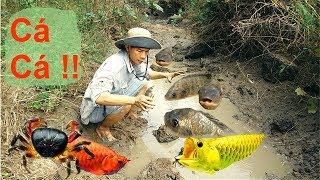 Bắt Được Cá To Ở Con Suối Cạn Nước .Thật Không Thể Tin Được Bắt Cá Bằng Tay .Catch Fish By Hand