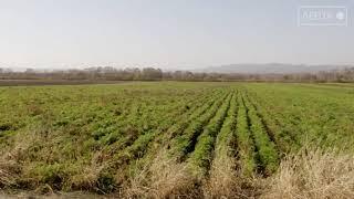 Сельхозработы завершаются на артёмовских полях