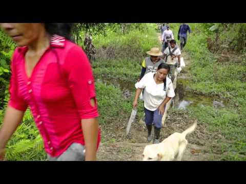 Reforestation project in Colombia - short version