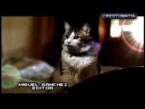 Oscar El Gato De La Muerte