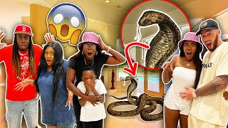 I Cant Believe This Snake Followed Them To Our House! *So Scary*