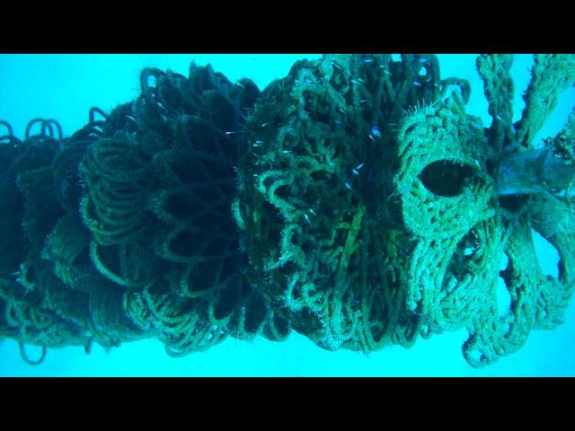 拯救美人魚的家!以色列用3D列印打造「人造珊瑚礁」 有助海底世界恢復生態
