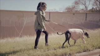Why Retired Racing Greyhounds Make the Best Pets HD