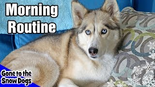 My Dog's Morning Routine   Huskies Morning Routine 2018