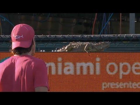 ATP World Tour Masters Miami