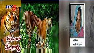 Tiger Hunting In Nallamala Forest..