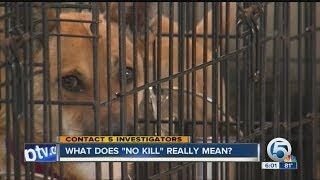 What does a 'no kill' pet shelter really mean?