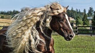 Dünyanın EN GÜZEL 10 At CİNSİ SİZİ Nefessiz BIRAKACAK !