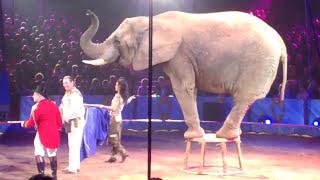 Festival International du cirque de Monte Carlo 2010  Les éléphants