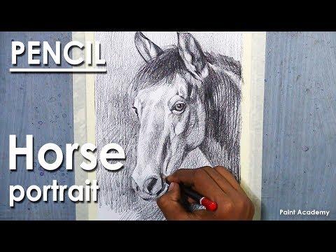 Pencil Shading techniques : Horse Portrait