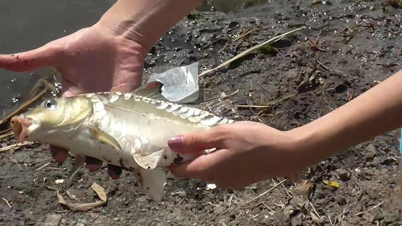 Рыбалка на реке сосыка