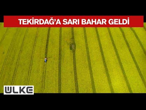 Tekirdağ'da kanola tarlaları kente 'sarı bahar'ı yaşatıyor