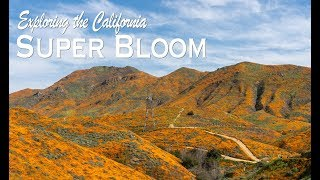 Walker Canyon Poppy Super Bloom in Southern California