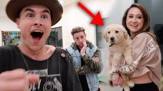 Ep. 7 - BOUGHT NEW PUPPY PRANK ON ROOMMATE!!
