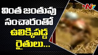Mysterious creature attacks cows, buffaloes in East Godava..